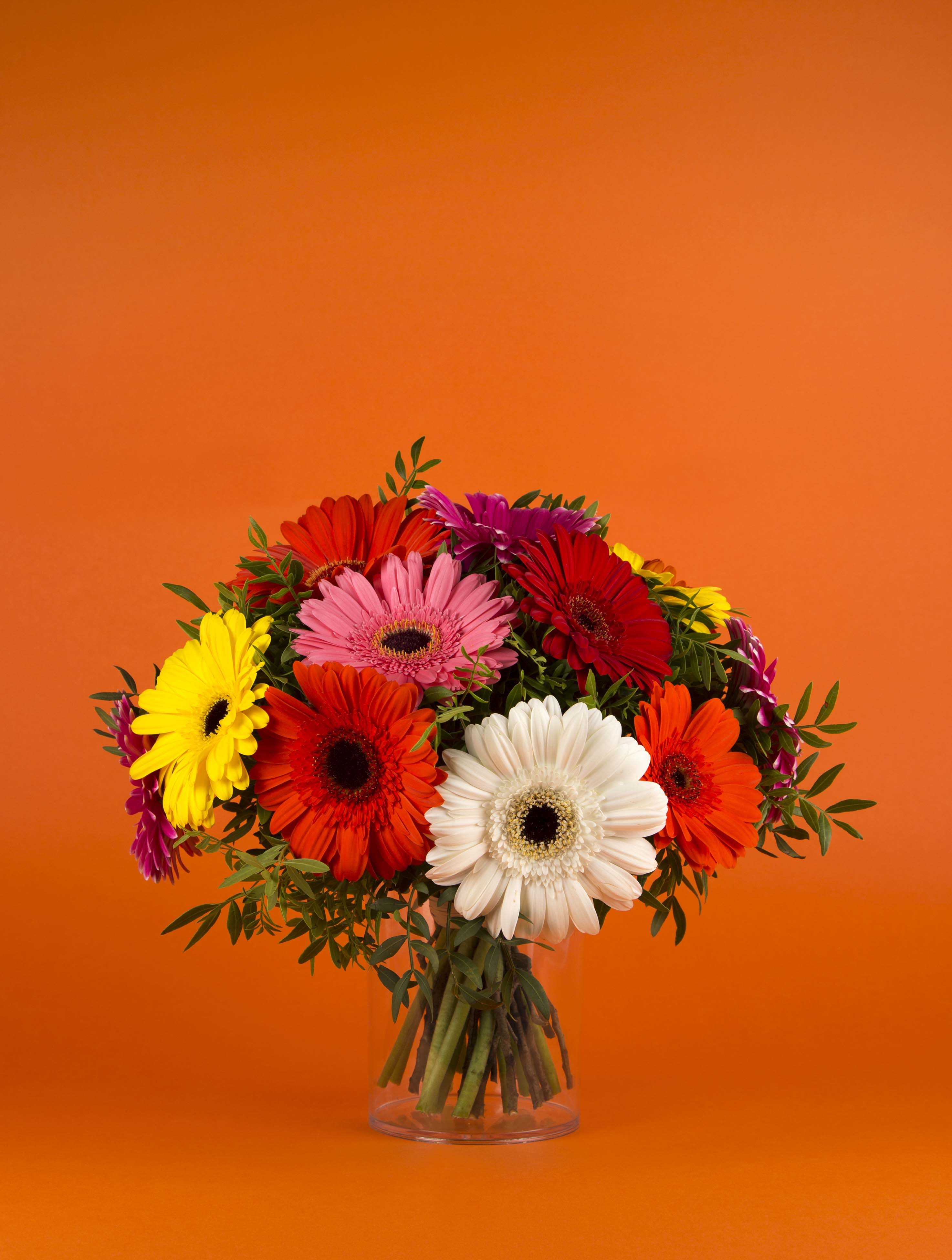 Bouquet de couleurs - gerbera