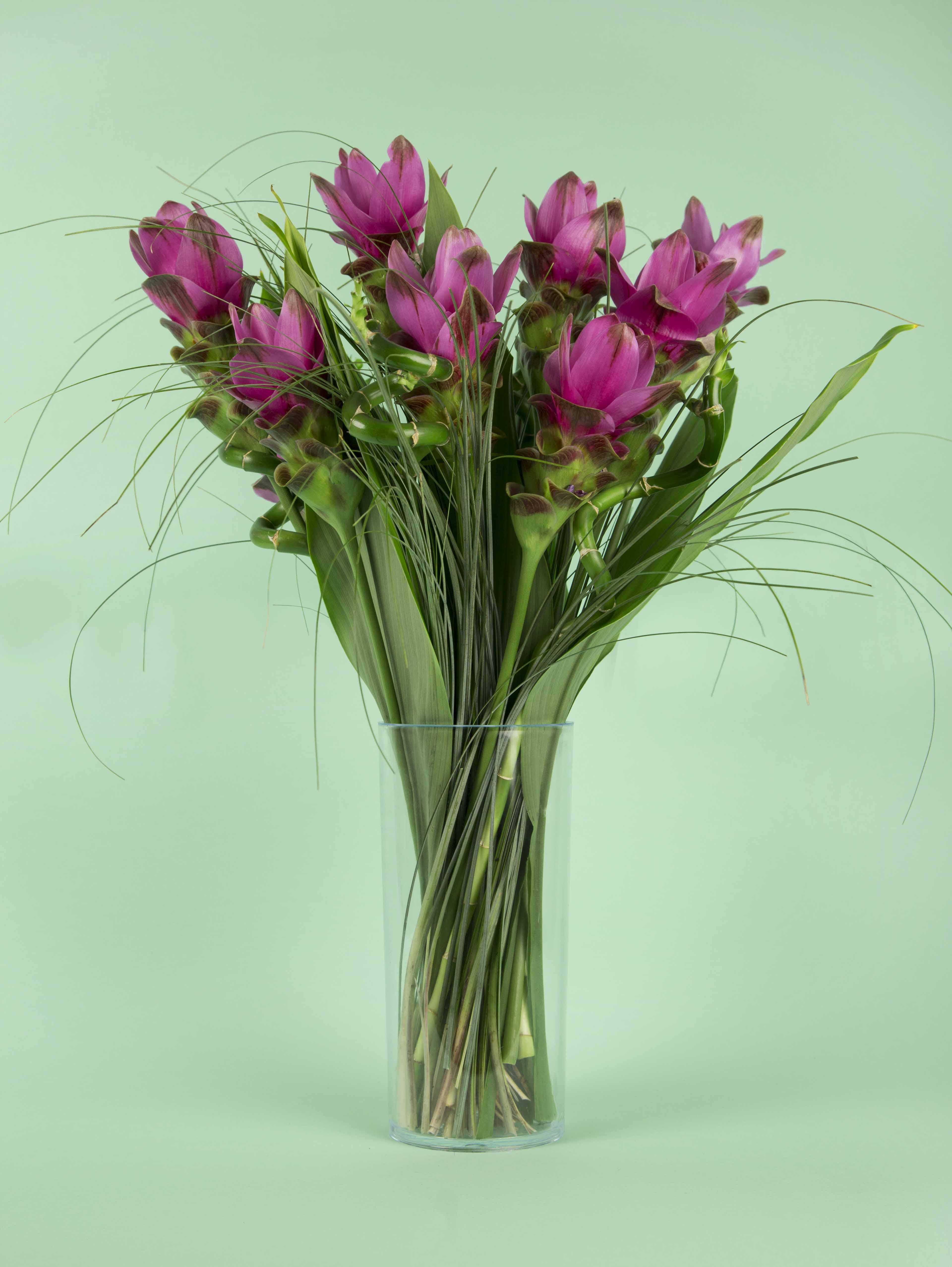 Bouquets de fleurs mauves - Lucky curcuma