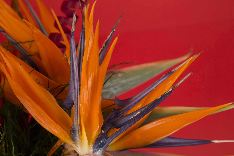 zoom fleur kokomo bis