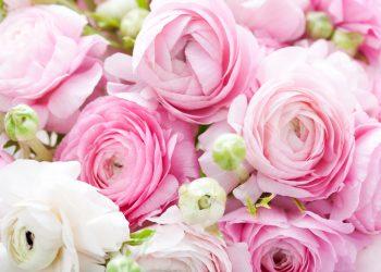 entretien des fleurs