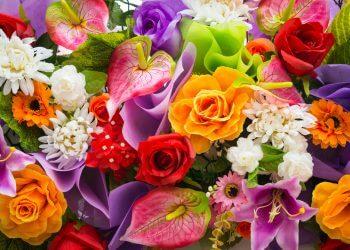signification couleur fleurs