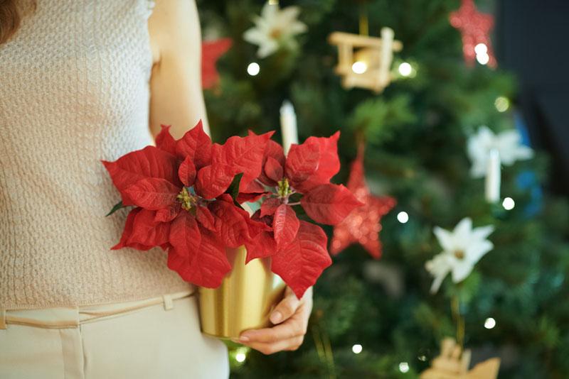 Quelles fleurs offrir ou livrer pour Noel ?