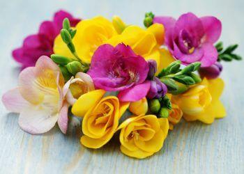 fleur freesia