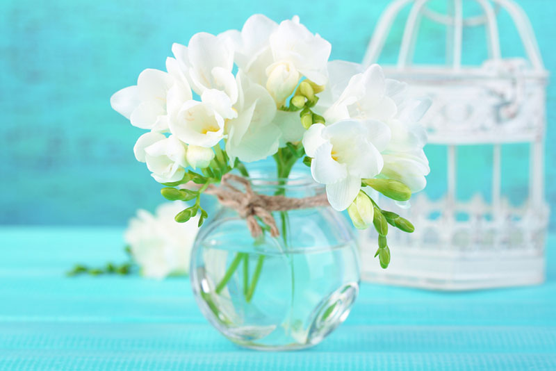 bouquet de freesias blanches