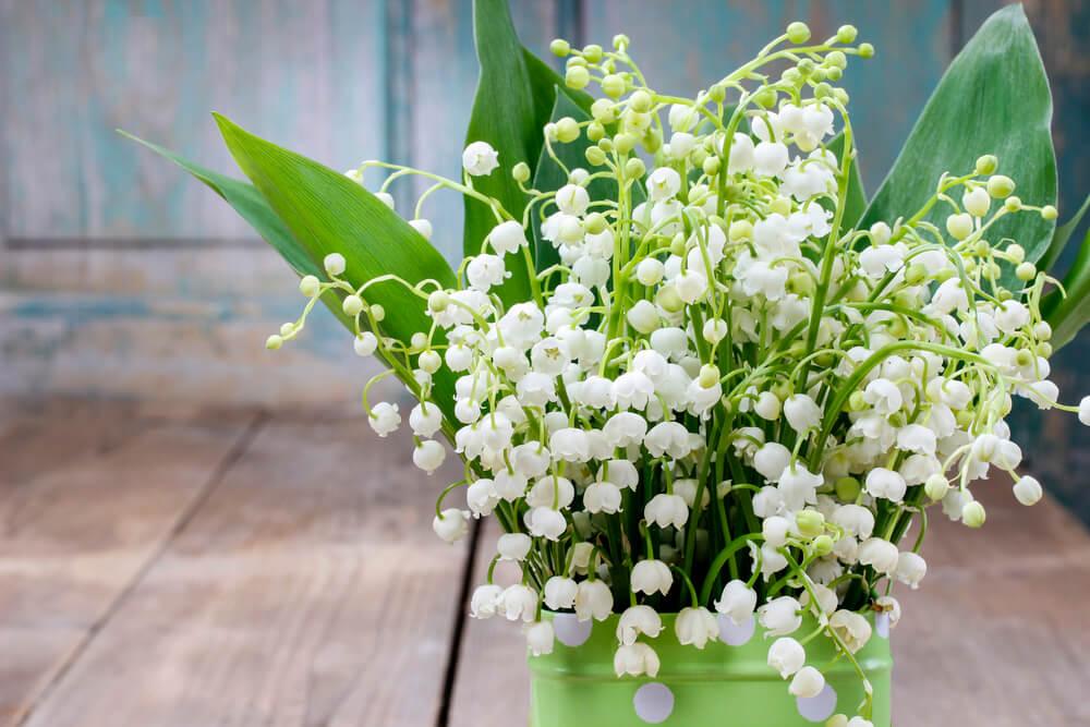 bouquet de muguet 1er mai