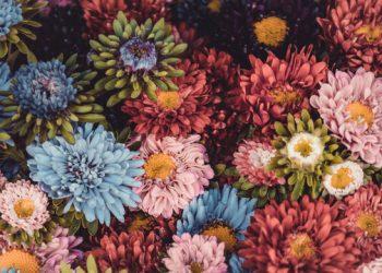 Le top 10 des fleurs d'automne