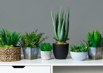 Top 10 des plantes d'intérieur pour son appartement