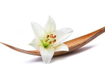 fleur de lys signification