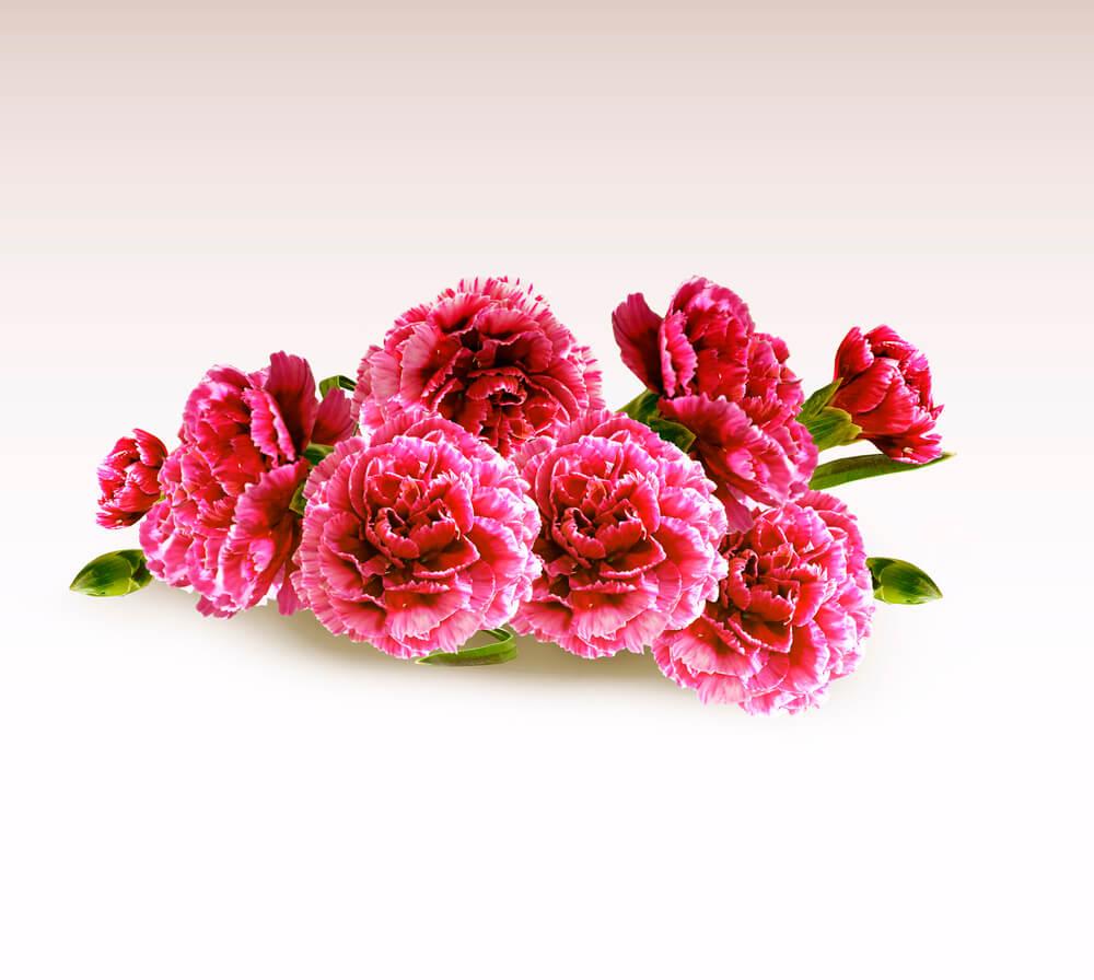 fleurs de naissance janvier
