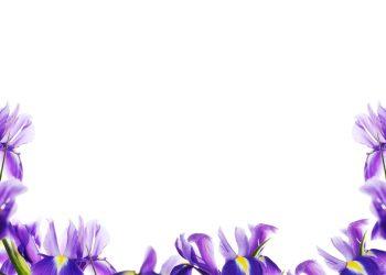 fleurs de naissance février